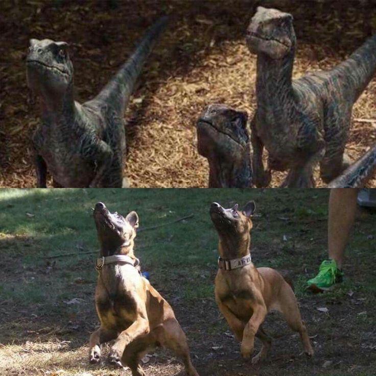 dog training jobs london
