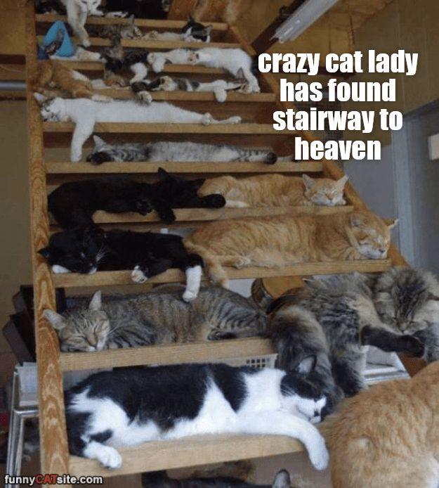 Crazy cat lady has found stairway to heaven http://cheezburger.com/9117722880