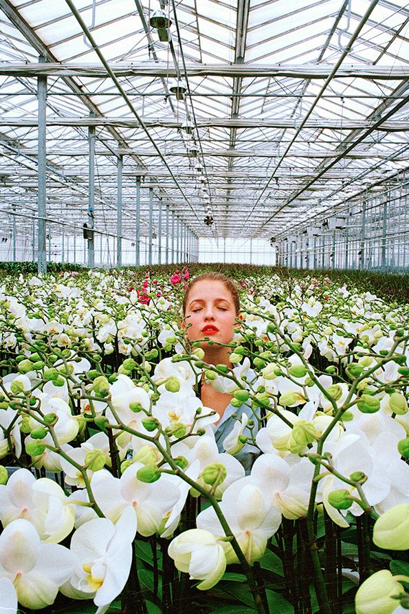 Jasmine Deporta: Orchids