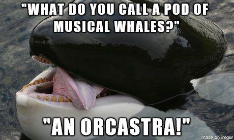 Ha. Ha. Ha. Ha. Haaaaaa. That's  soooooo funny.ha. Ha (if you don't get sarcasm then learn sarcasm)
