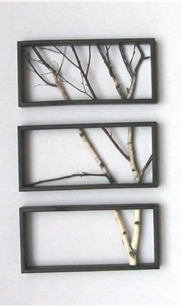 Very cool..   Framed sections of a birch wood branch..