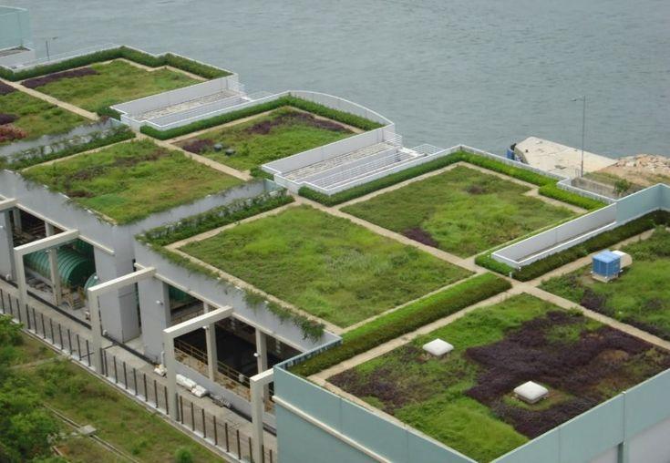 """Las cubiertas vegetales son parte de una """"moda verde"""" y, aunque se han utilizado durante mucho tiempo, hacen tan sólo unos pocos años que se comenzaron a apreciar sus ventajas."""