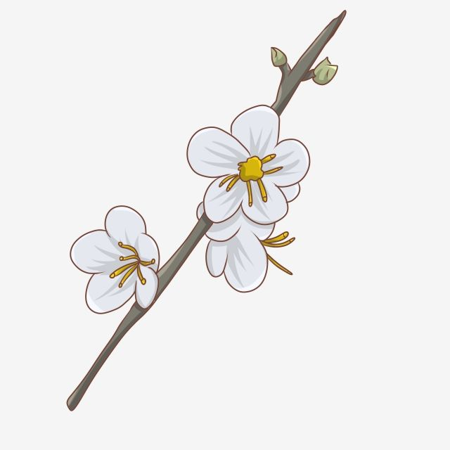 من ناحية رسم 24 الشمسية حيث فرع زهرة الطاقة الشمسية 24 حيث زهرة زهرة فرع Png وملف Psd للتحميل مجانا Flower Branch Hand Painted Flowers