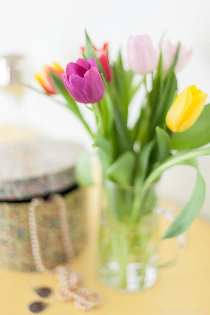 Como cuidar tulipanes frescos