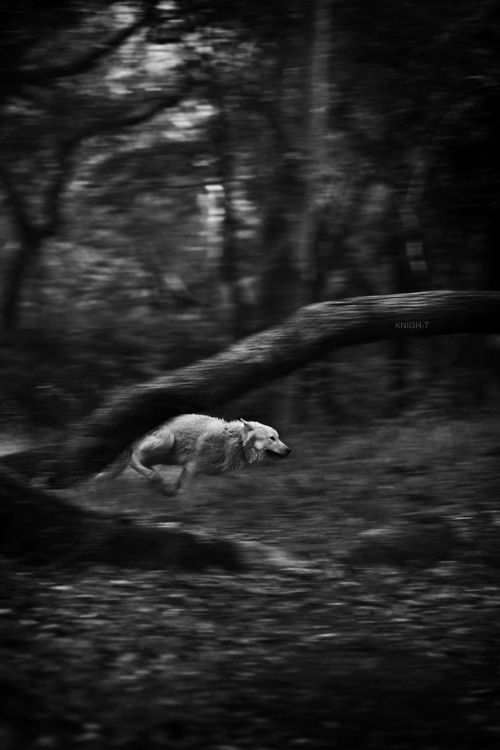One of the best dreams, running through the woods, full bore...