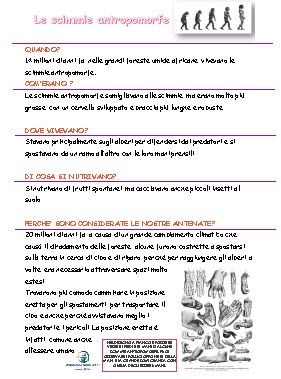 schede didattiche sui primati, schede didattiche sull'origine dell'uomo, evoluzione degli ominidi, schede didattiche scuola primaria, schede didattiche storia, classe terza