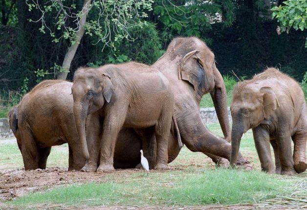 Elephants ill-treated in Mysore zoo, says animal welfare group