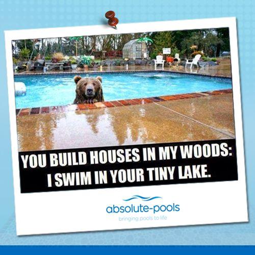 Well, bears need to cool off too. The summer is just too hot!  #absolutepools #MyDubai #UAE