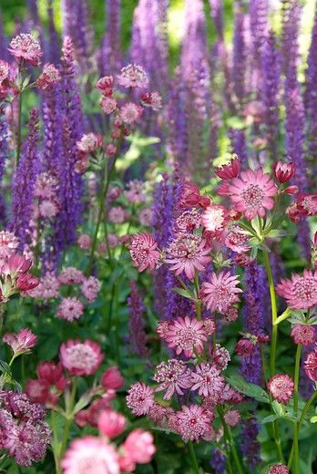 Inspiration for a romantic garden with perennials. They will emerge, grow and flower every year.