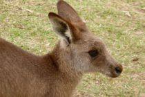 Men Torture and Stomp Off Head of Kangaroo - Take Action Now... - Care2 News Network