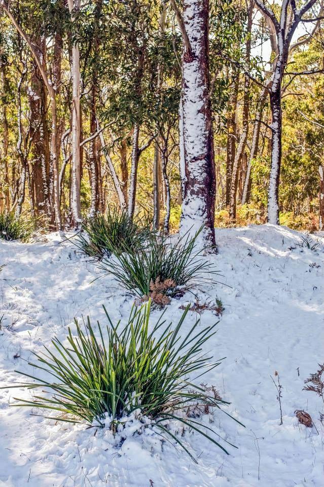 Snowfall around Oberon. Photo: David Hill, Blue Mountains Lithgow & Oberon Tourism