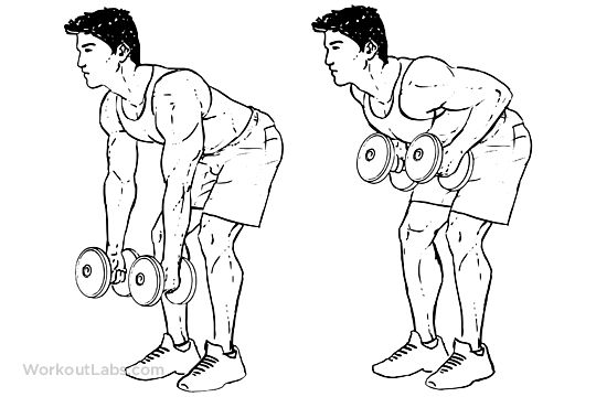 Standing Two-Armed Bent Over Dumbbell Rows