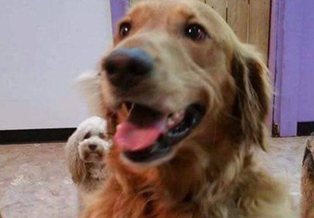 Um golden retriever do estado da Carolina do Norte, nos EUA, achou que era justo trocar seu dia de cão por um dia em um spa canino, localizado a 1,5 km de sua casa, na última sexta-feira. Ele só esqueceu de avisar sua dona. Riley, o cão em questão, havia passado no mesmo dia pelo tal spa canino e choramingado de vontade de brincar com seus amigos hospedados no local. Riley é um frequentador do spa há mais de cinco anos. Contrariado, foi levado para casa. Mas ele tinha um plano de fuga. Qual…