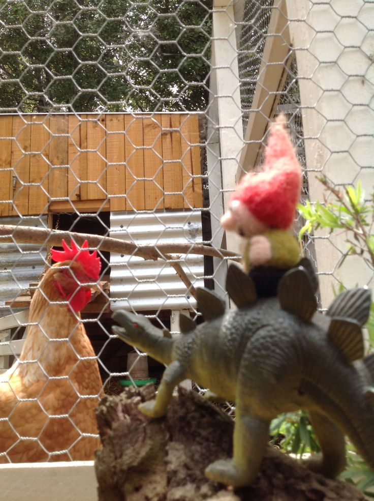 Showdown at the Chicken Coup Corral.