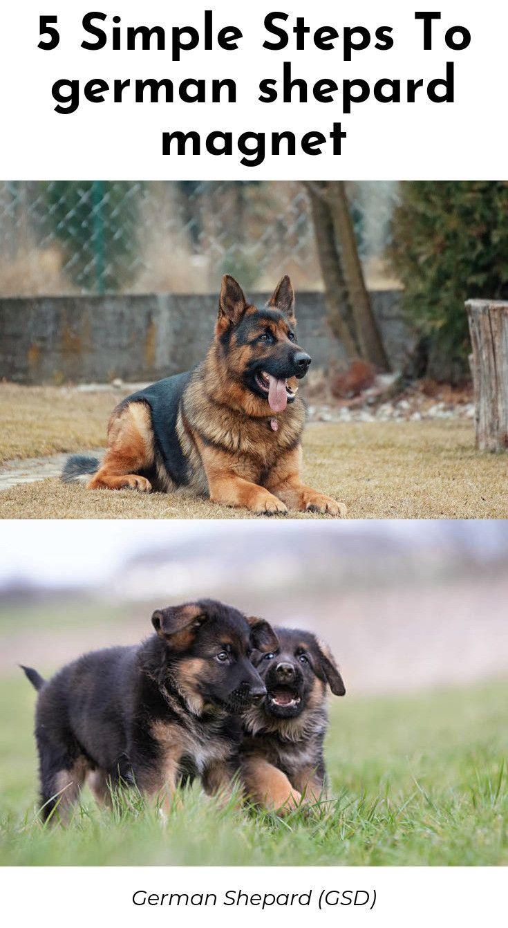 Best German Shepherd Rescue California Trained German Shepherd