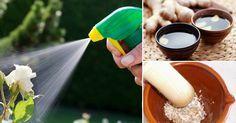 Cómo preparar pesticidas, abonos y herbicidas ecológicos