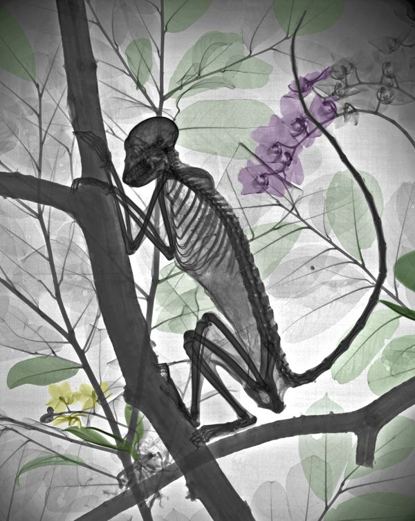 Monkeys are scarily human. | 17 Terrifying X-Rays That Will Forever Change The Way You Look At Animals