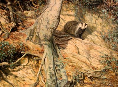 Badger pictures - original paintings and prints for salehttp://www.wildlife-art-paintings.co.uk/animal-picture-pictures/badger-badgers.htm#