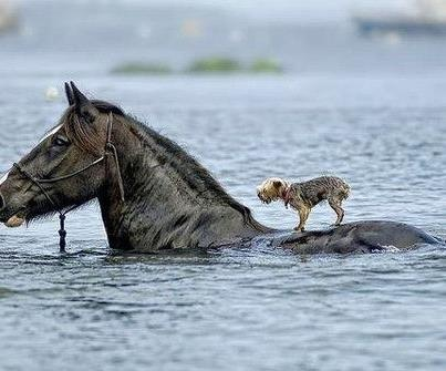 I Gotcha Buddy: Sayings, Animals, Life, Quotes, Horses, Stand Up, Strong People, Inspirational