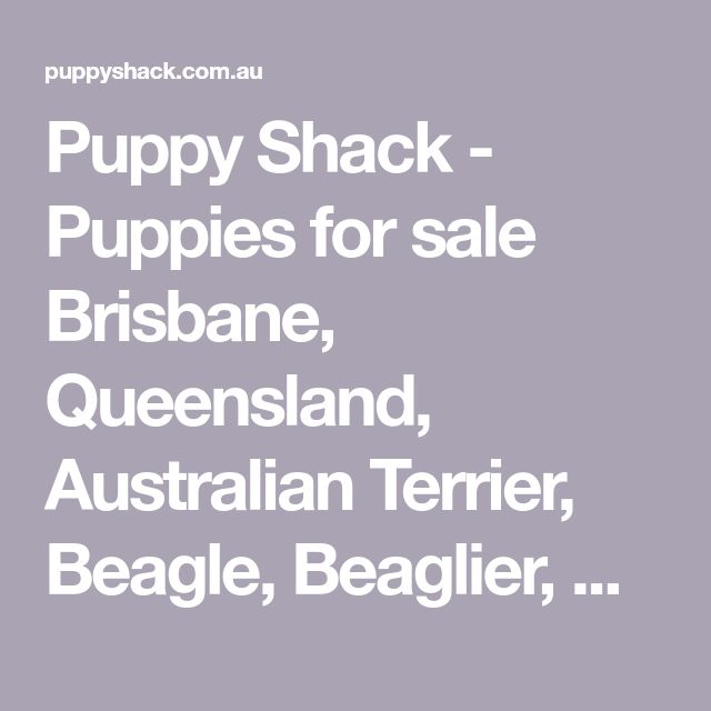 Puppy Shack - Puppies for sale Brisbane, Queensland, Australian Terrier, Beagle, Beaglier, Bichon Frise, Cavalier King Charles Spaniel, Cavoodle, Chihuahua, Cocker Spaniel, English Bull Terrier, Golden Retriever, Groodle, Jack Russell x, Labradoodle, Labrador, Lhoodle, Maltese x, Mini Dachshund, Mini Fox Terrier, Mini Poodle, Mini Schnauzer, Moodle, Poodle, Pug x, Rottweiler, Shih Tzu, Shoodle, Spanador, Springer Spaniel x, Spoodle, Tibetan Spaniel Brisbane