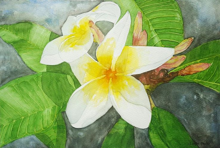 Frangipani 2 Artist Lorna Pauls  Watercolour on Half sheet 300g Bockingford paper Done April 2017