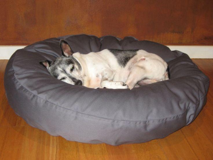 Miniature Fox terrier, Fraser - Barka Parka