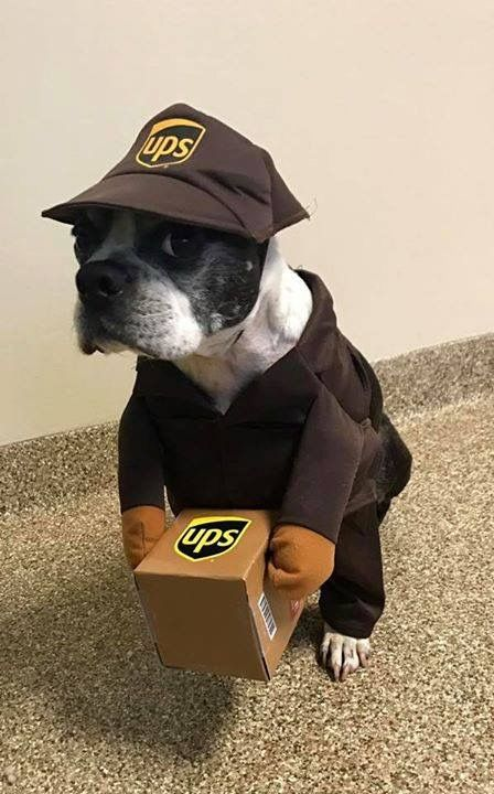 Dogs in costumes make me laugh!