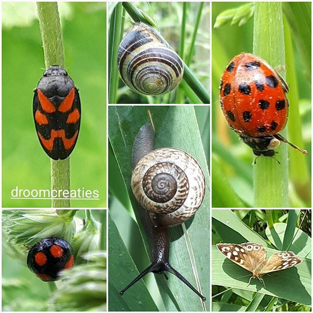 Dots, stripes and spirals in macro nature    #nature #collage #dots #stripes #spirals #macro #macrophoto #snail #butterfly #ladybug #slak #vlinder #bloedcicade #lieveheersbeestje #insects #insecten #droomcreaties