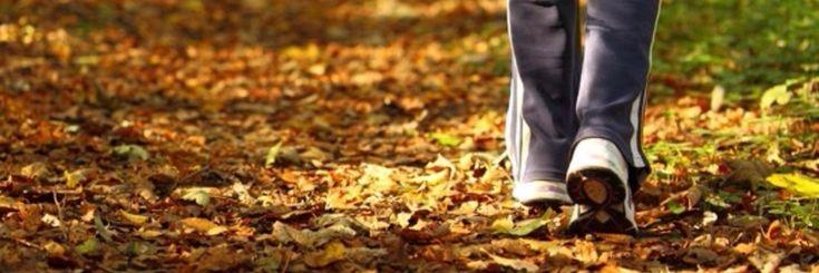Iedereen weet wel dat wandelen het lichaam goed doet.Maar het zijn niet enkel je spieren en je hart die er voordeel bij halen. Onderzoekers van de Universiteit van New Mexico Hi