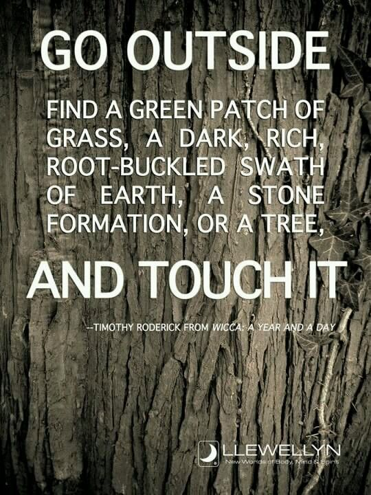 """Druids Trees:  """"Go outside; find a green patch of grass, a dark, rich root-buckled swath of earth, a stone formation, or a tree, and touch it.""""  ---Timothy Roderick."""