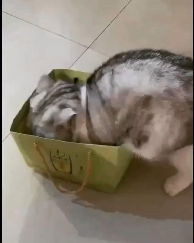 #catvideo #catvideos #cats #kitty #kitties #prettykitty #cutecats
