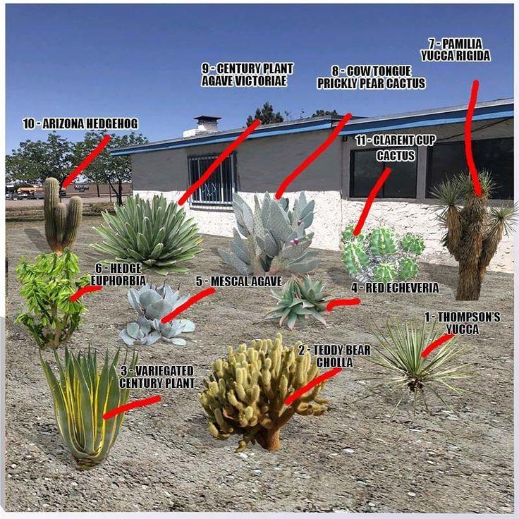 Desert plants names and pictures desert plants plants