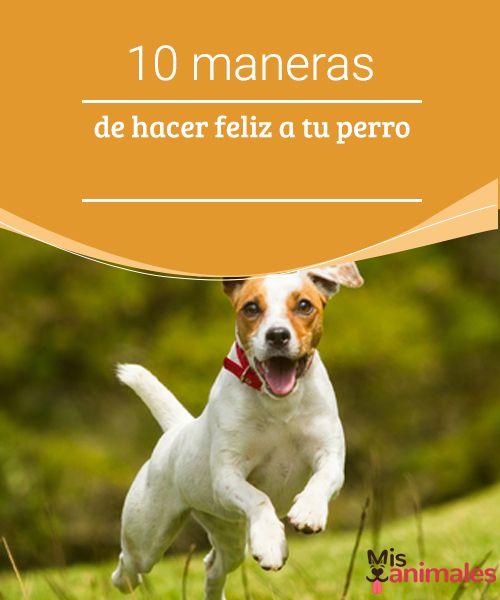 10 maneras de hacer feliz a tu perro  ¿Cómo puedes hacer feliz a tu perro? Averígualo en este artículo, en donde encontrarás varios consejos y tips para hacer sentir mejor a tu mascota. #alegres #mascota #consejos