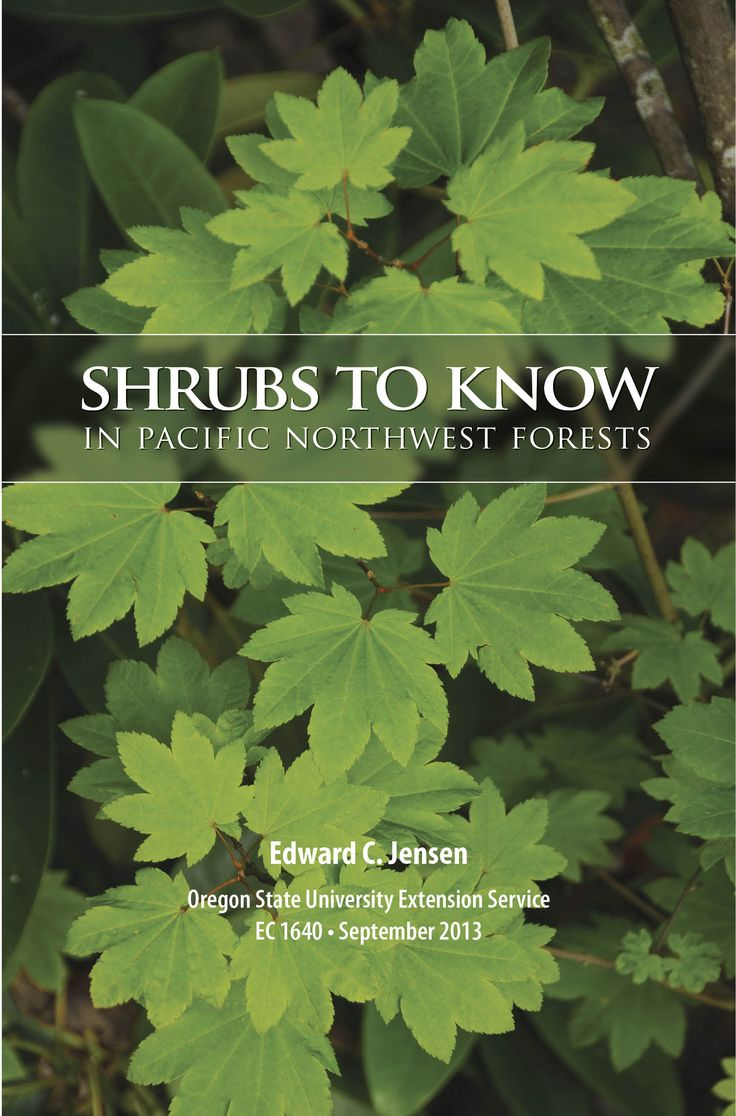 This full-color, simple-to-use field guide makes shrub identification easy and fun. It features 100 of the most common shrubs that grow in and around Pacific Northwest forests--from southern British Columbia to northern California and from the Pacific Ocean to the northern Rockies. Includes an overview of shrub communities in the Pacific Northwest; more than 500 color photos; individual range maps and complete descriptions for each species; notes on range and habitat, response to…