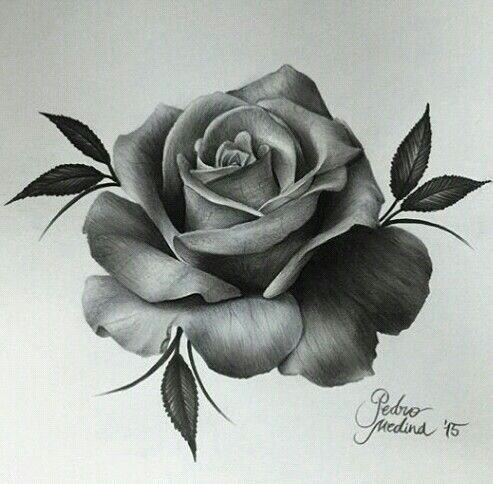 25 Best Ideas About Rose Drawing Tattoo On Pinterest Tattoos Black And Grey