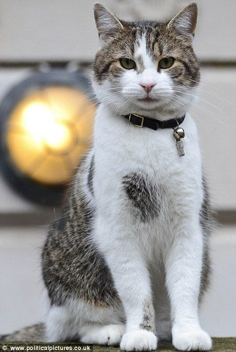 Larry! my favourite internet cat from Downing Street!