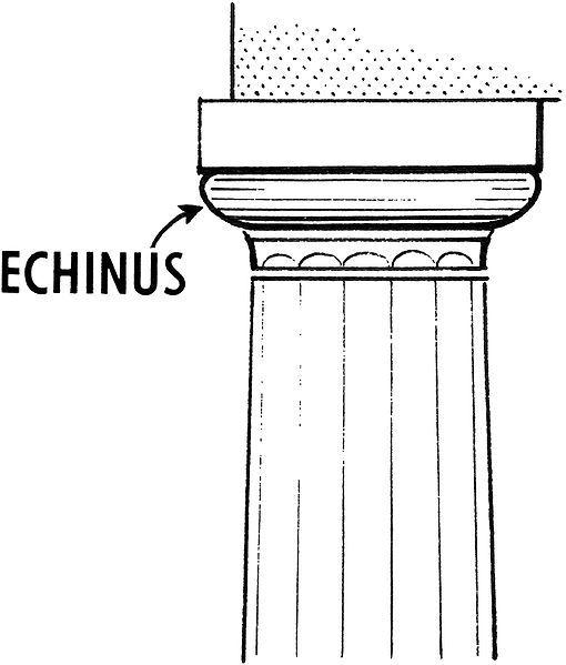 Echinus