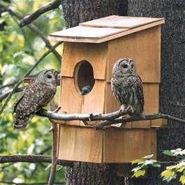 essay on how to bulid a bird house