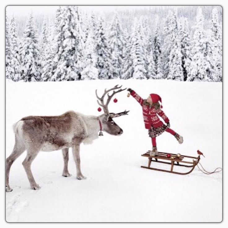 Krásné vánoční svátky :-)