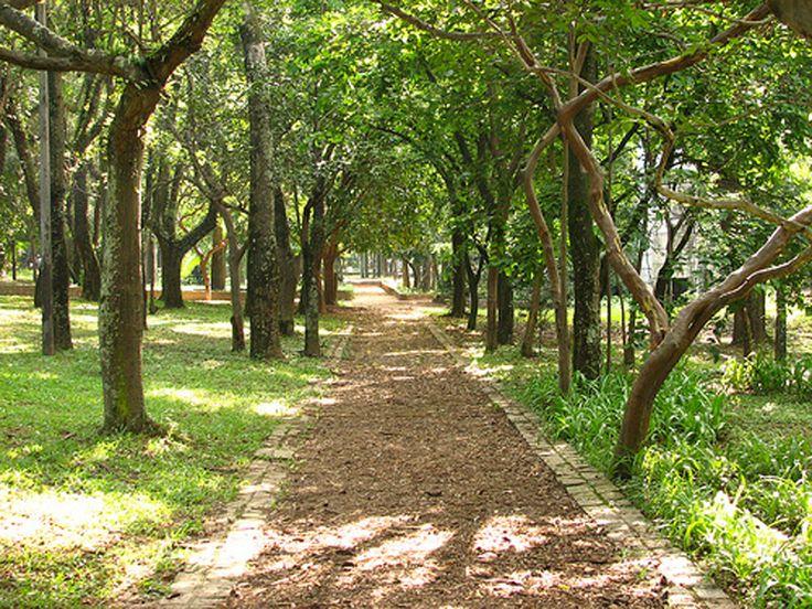 Infraestrutura: O Parque Piqueri tem áreas de estar, pista de cooper, bicicletário, campo de futebol de areia, quadra de campo, quadras poliesportivas, aparelhos de ginástica, playgrounds, lago, palco para apresentações, estacionamento, sanitários, bosque de leitura e conchas de bocha. Funcionamento: Diariamente, das 6h às 18h. Tel.: (11) 2097-2213