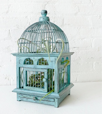 air plant in vintage bird cage