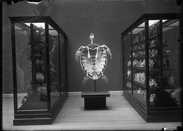 Skeleton of a turtle on display | Flickr - Photo Sharing!
