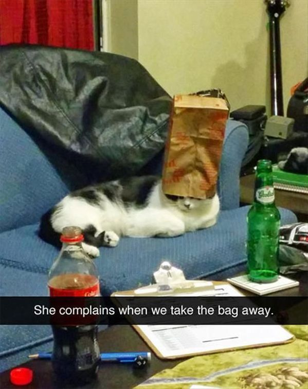 100  Funniest Snapchats Pictures