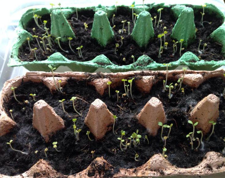 1000 ideen zu kartoffeln pflanzen auf pinterest. Black Bedroom Furniture Sets. Home Design Ideas