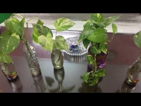 Grow Money Plant In Glass Bottles Cheap Diy Interior Decor Youtube Plant In Glass Plants In Bottles Glass Bottle Diy