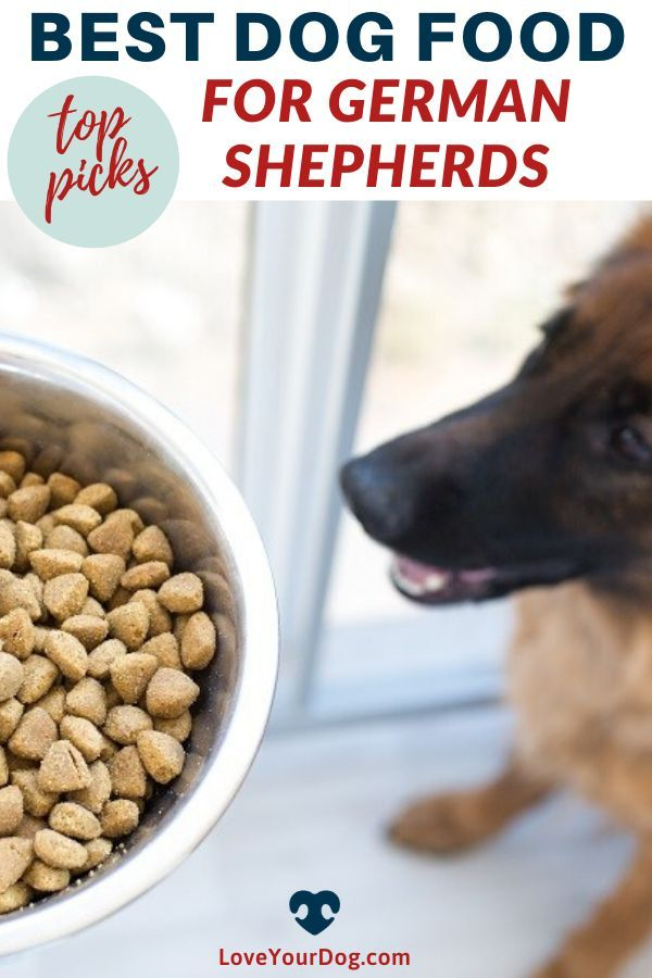 Best Dog Foods For German Shepherds Puppies Adults Seniors