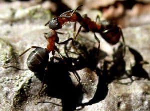 die besten 20+ hausmittel gegen ameisen ideen auf pinterest
