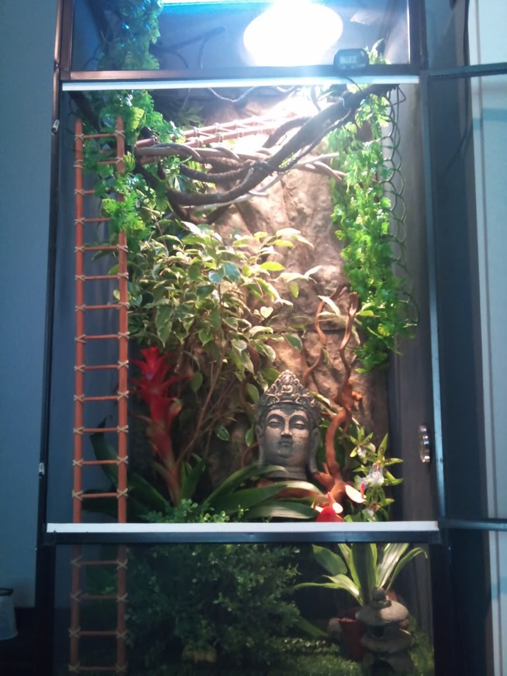 ***The Official Enclosure Picture Thread*** - Page 17 - Chameleon Forums