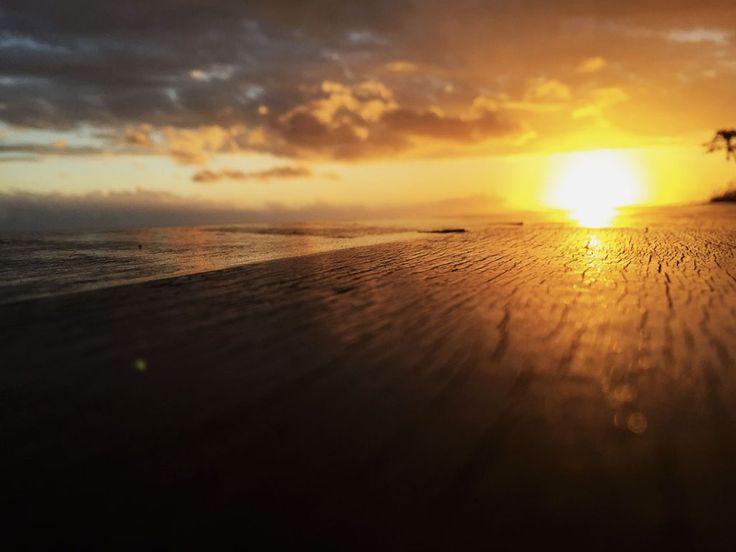 Escapade au Palm - Ile de la Réunion