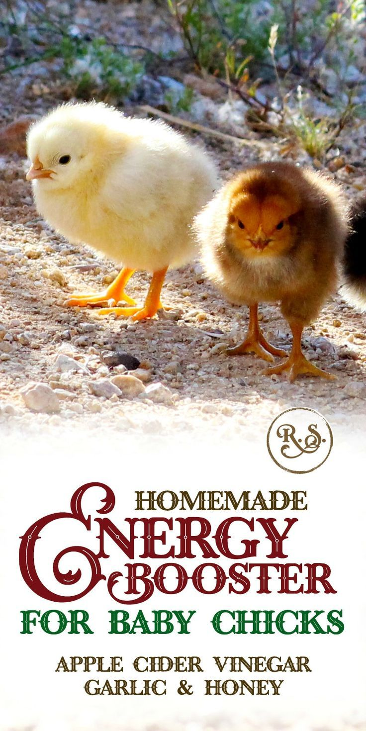 Homemade DIY Energy Booster For Baby Chicks | Home- Homesteading